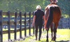 Jewel Court Stables - Winter Garden: $22 for a One-Hour Horseback Trail Ride at Jewel Court Stables in Winter Garden ($45 Value)