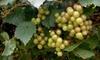 Benjamin Vineyards & Winery - 8, Newlin: Wine Tasting for Two Including Souvenir Glasses at Benjamin Vineyards & Winery in Graham