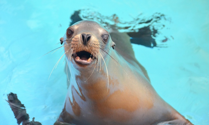 Pacific Marine Mammal Center: $23 for a Marine Mammal Adoption Kit from Pacific Marine Mammal Center ($45 Value)
