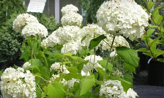 Creekside Garden Center - Grand Rapids: $20 for $40 Worth of Select Plants at Creekside Garden Center