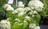 Creekside Garden Center - Grand Rapids: $20 for $40 Worth of Select Plants at Creekside Garden Center