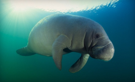 1 Child Ticket to a Manatee Eco-Tour (a $35 value) - Double R's Fishing and Tours Company in Naples