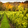 55% Off Winery Tour