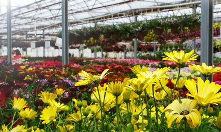 $12 for $20 Worth of Flowers, Shrubs, Trees, and More at Floral Acres Greenhouses & Garden Centre