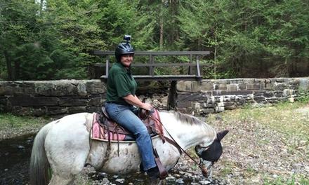 $28 for $50 Worth of Horseback Riding — Rocke N Horse Farm