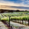 54% Off Wine Tasting for Two in Grass Valley