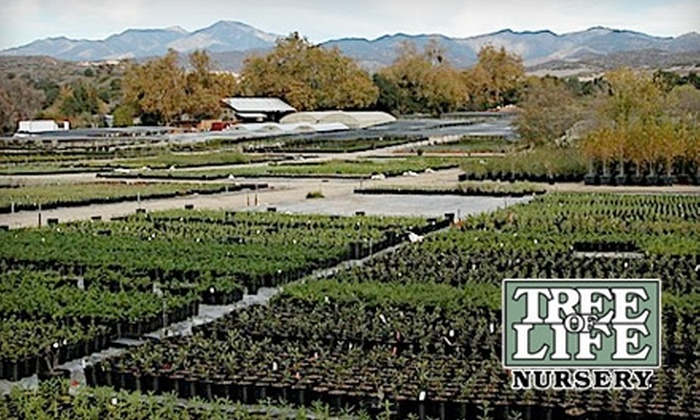 Tree of Life Nursery - Trabuco: $20 for $40 Worth of Plants at Tree of Life Nursery in San Juan Capistrano