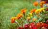 Up to 58% Off Orchard in Bloom Garden Show