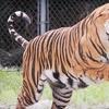Up to Half Off Animal-Sanctuary Visit in Sarasota