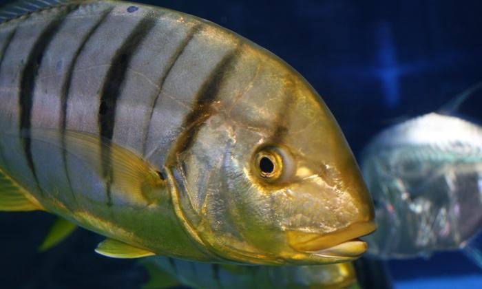 Aquarium of Boise - Franklin - Cole: Aquarium Visit for Two, Four, or Six at Aquarium of Boise (Up to 45% Off)