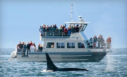 Five Star Whale Watching - Five Star Whale Watching in Victoria