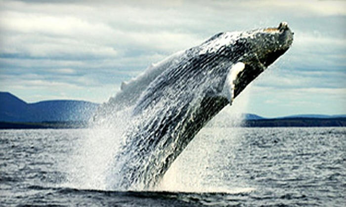 Love Boat Whale Cruises - Cheticamp: $32 for a Seaside Whale Cruise for Two from Love Boat Whale Cruises in Cheticamp (Up to $64.40 Value)