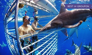 25% Off Shark-Cage Diving at Hawaii Shark Encounters, plus 9.0% Cash Back from Ebates.