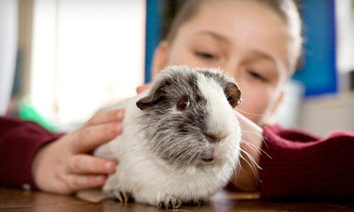 Corbret's Pets - Devonshire: $20 for $40 Worth of Pets and Pet Supplies at Corbret's Pets