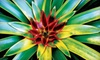 52% Off Plants in Southwest Ranches