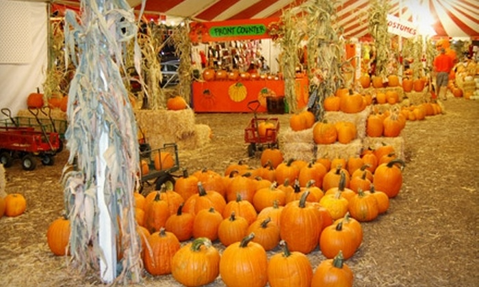 The Pumpkin Factory - Westminster Mall: $12 for a Pumpkin-Patch Outing at The Pumpkin Factory in Corona ($31 Value)