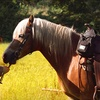 51% Off Horseback Trail Ride in Issaquah