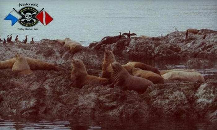 Naknek Charters and Diving - Friday Harbor: $35 for an Adult Ticket to a Three-Hour Sea Lion Tour from Naknek Charters and Diving ($65 Value)