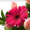 Half Off Floral Arrangements in Cedarburg