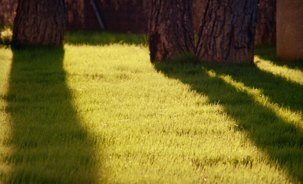 Lawn-Care Services on Up to a Half-Acre - Always Affordable Lawn Care in