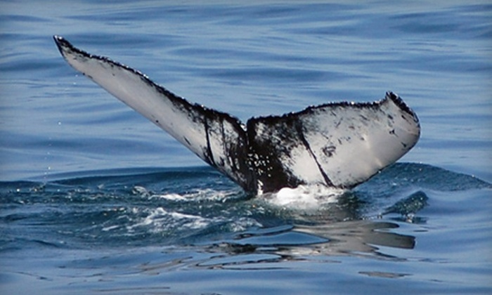 Cape May Whale Watcher - Cape May: Whale-and-Dolphin-Watching Excursion in Cape May(Up to $40 Value)