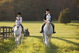 Zephyr Farm Inc.: Private Horseback Riding Lessons at Zephyr Farm Inc. (Up to 53% Off). Four Options Available.