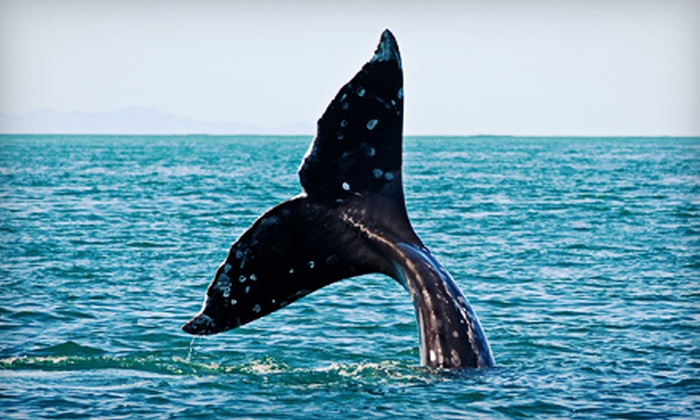 Harbor Breeze Cruises - Downtown Long Beach: $45 for a Blue-Whale-Watching Cruise for Two from Harbor Breeze Cruises in Long Beach (Up to $100 Value)