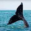 Up to 55% Off a Whale-Watching Cruise for Two in Long Beach