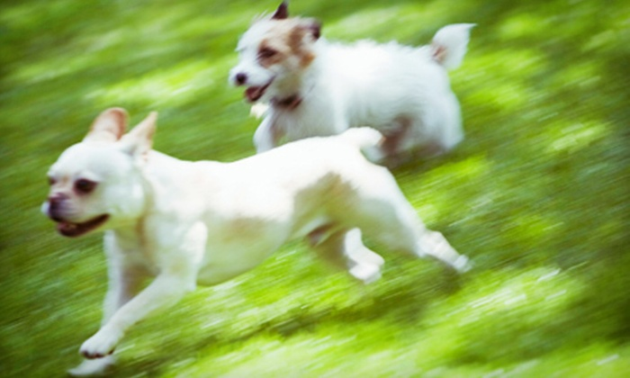 Pet Vet Animal Hospital - Dallas: Feline or Canine Exam and Health Plan or Microchip for One or Two Pets at Pet Vet Animal Hospital (Up to 60% Off)
