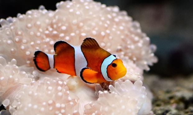 Blue_Coral_-_3-1000x600.jpg