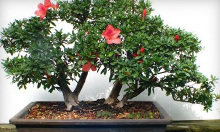 Schley's Bonsai & Supplies - Deland: $20 for $40 Worth of Plants, Bonsai, and Supplies at Schley's Bonsai & Supplies