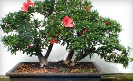 $40 Groupon to Schleys Bonsai & Supplies - Schleys Bonsai & Supplies in Deland
