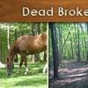 Half Off Trail Ride at Dead Broke Farm