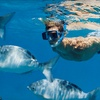 Up to 52% Off Snorkeling or Scuba in Pompano Beach