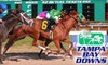 Tampa Bay Downs - Citrus Park-Fern Lake: $9 For a Day Package at Tampa Bay Downs ($20 value)