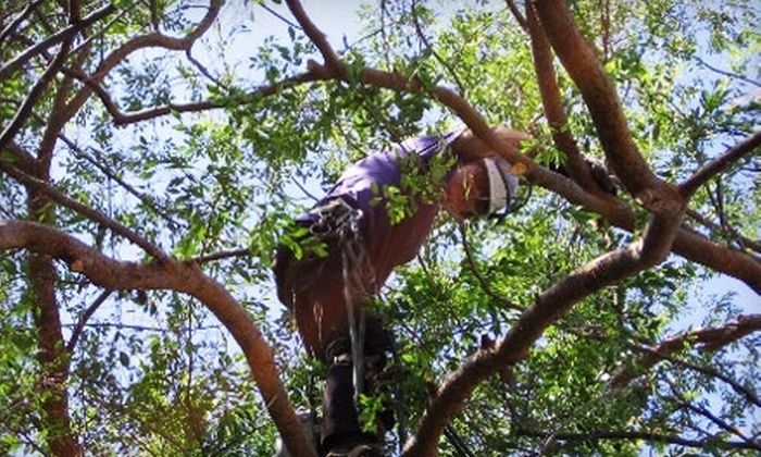 Arbor Artistry - Del Mar: $100 for One Hour of Tree Trimming from Arbor Artistry ($200 Value)