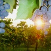 Up to 51% Off Wine & Dine Event in Nicholasville