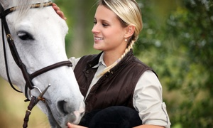 Anne Benson Stables: Two, Four, or Six Private Horseback-Riding Lessons at Anne Benson Stables (Up to 57% Off)