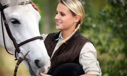 Two, Four, or Six Private Horseback-Riding Lessons at Anne Benson Stables (Up to 52% Off)
