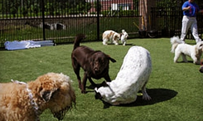 Petropolis Pet Center - Chesterfield: Pet Boarding or Five Doggie Day Camps at Petropolis Pet Center in Chesterfield