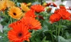 Iowa Outdoor Products - Urbandale: $15 for $30 Toward Gardening Goods at Iowa Outdoor Products in Urbandale