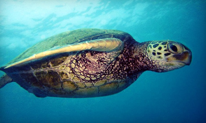 Aqua Zone Scuba Diving & Snorkeling Center - Ala Moana - Kakaako: $24 for a Sea Turtle Snorkel Tour or Fireworks Cruise from Aqua Zone Scuba Diving & Snorkeling Center (Up to $49 Value)