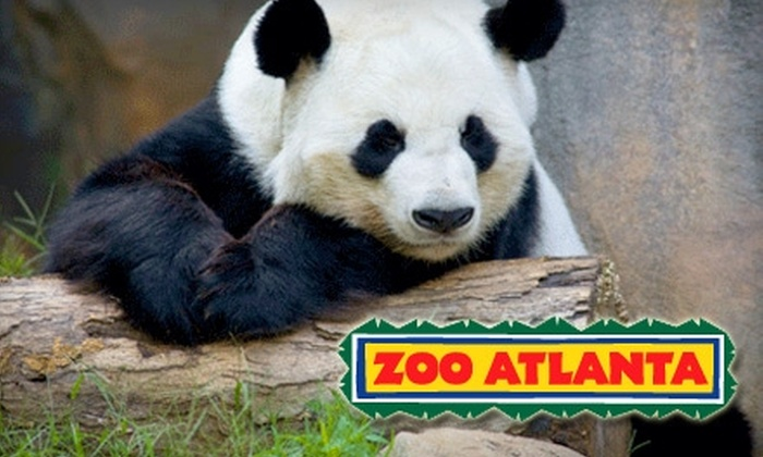 Zoo Atlanta is a privately owned and managed nonprofit wildlife park and zoological trust. A favorite destination for tourists and locals who are looking to enjoy the more than species of animals which include giant pandas.