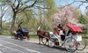 Private Short or Long Carriage Ride from Central Park Sightseeing
