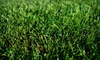 Houseworth Lawn Care: $69 for Lawn Aeration from Houseworth Lawn Care (Up to $180 Value)