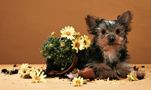 All Things PAWSitive: $79 for Six-Week Dog-Training Course at All Things PAWSitive ($189 Value). Five Options Available