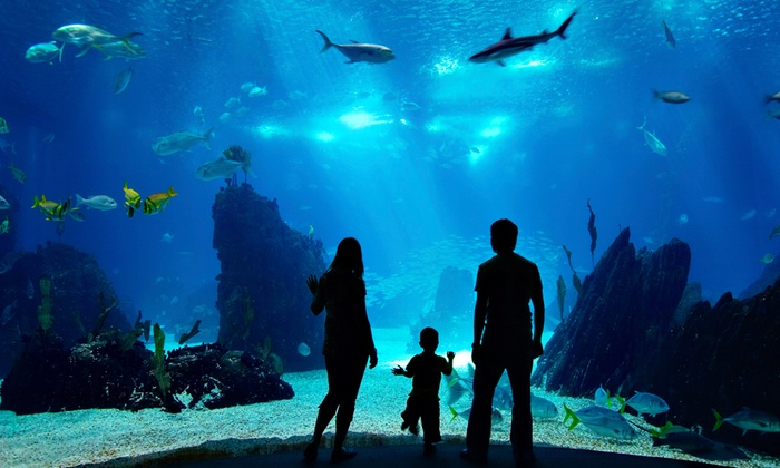 Ushaka Marine World - Durban: Combo Ticket to uShaka Marine World for R99 (50% Off)