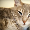 (G-Team) Friends for Life No Kill Animal Shelter - Greater Heights: If 40 People Donate $10, Then Friends for Life No Kill Animal Shelter Can Buy Four Cat Climbers and Beds for Elderly Cats' Room