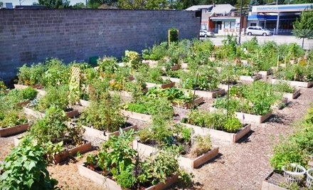 $10 Donation to The Peterson Garden Project - The Peterson Garden Project in