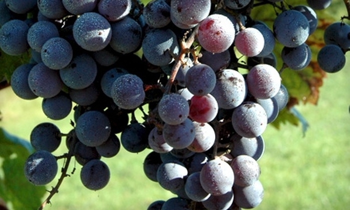 Two Saints Winery - Jackson: $20 for a Wine Tasting 101 Class for Two and Two Souvenir Glasses at Two Saints Winery in Saint Charles ($40 Value)